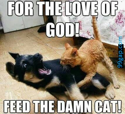 Cat And Dog Text Meme